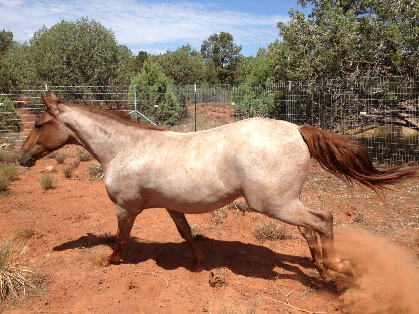 horses for healing harmony with horses sedona